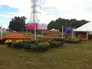 Pumpkin Patch Panarama