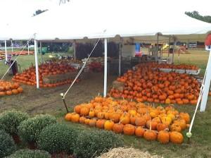 pumpkins under a tent
