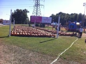 tons of pumpkins!